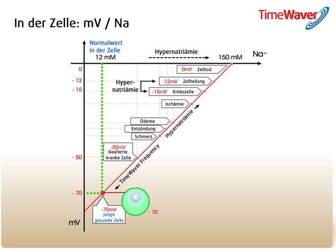 Zelle 1